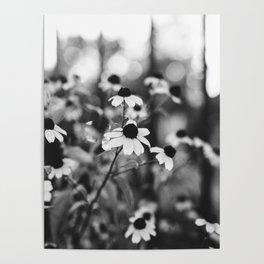 B+W Black-eyed Susans Poster
