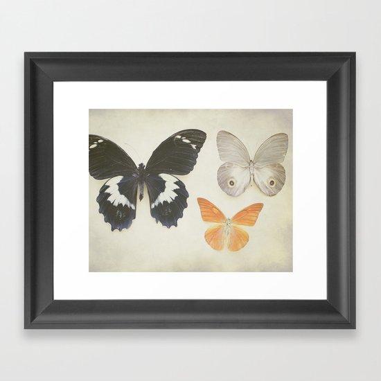 Brown Butterflies  Framed Art Print