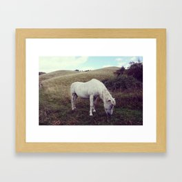 Pony Grazing Framed Art Print