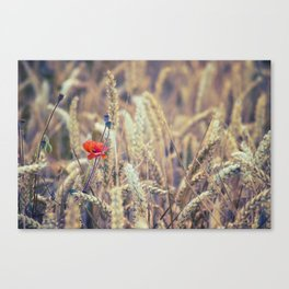 Wild Poppy in the Wheat Field Canvas Print