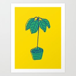 Avocado tree in clay pebbles houseplant art Art Print