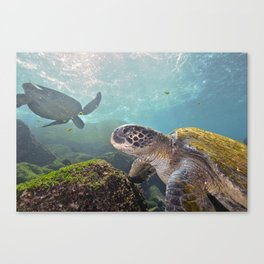 The Salad Bar is Open Canvas Print