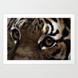 Eyes of the Tiger Art Print
