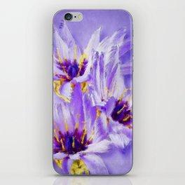 Catananche flowers iPhone Skin