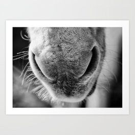 donkey snout Art Print