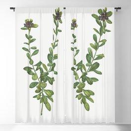 Lonicera Pyrenaica from Traite des Arbres et Arbustes que lon cultive en France en pleine terre (180 Blackout Curtain