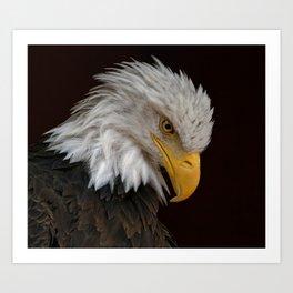 Bald Eagle | Bowed Head | Eagle | Bird | Wildlife Photography Art Print