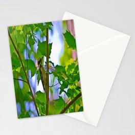 Downy Woodpecker Stationery Cards