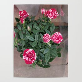 Painting the Roses Red Poster
