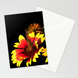 Flowers & Butterfly Stationery Cards