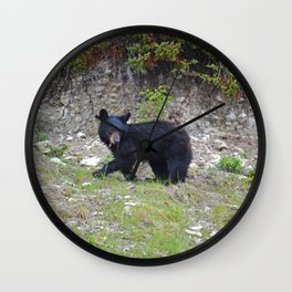 Young black bear munches on a dandelion in Jasper National Park Wall Clock