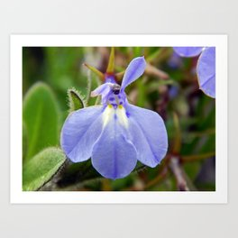 Pretty Blue Flower Art Print