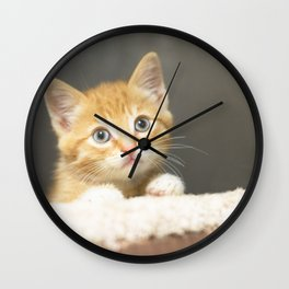 Ginger kitten playing in a box Wall Clock