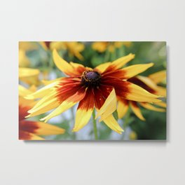 Summer Wild Flowers Photography Metal Print