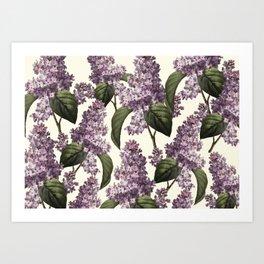 Botanical vintage lilac Art Print
