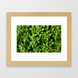 basil Framed Art Print