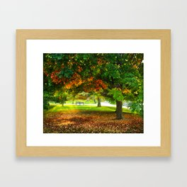 Changing colors of fall. Framed Art Print