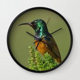 Orange Breasted Honey Bird Wall Clock