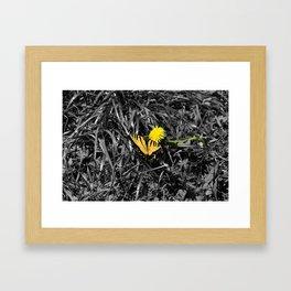 Selectivecolor Butteryfly Framed Art Print