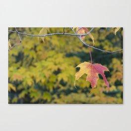 Acer Leaf Canvas Print