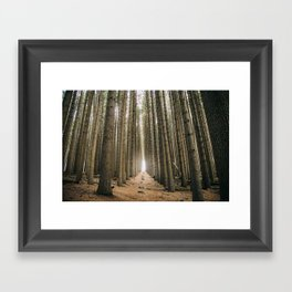 Sugar Pine Walk Framed Art Print