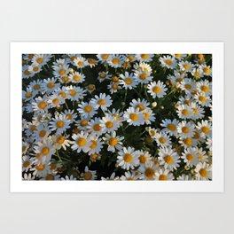 Daisy gfowers Art Print