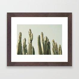 Desert Cactus 2 Framed Art Print