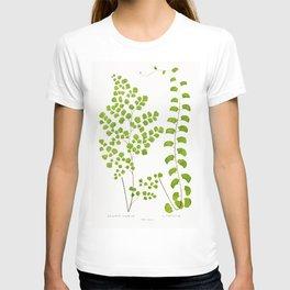 Edward Joseph Lowe - Adiantum Assimile and A. Lunulatum T-shirt