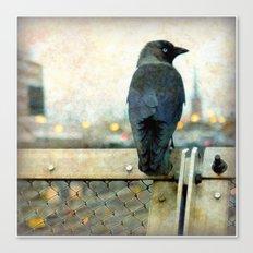 City bird Canvas Print