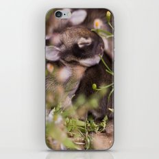 Easter babies iPhone & iPod Skin