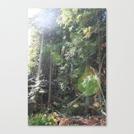 Sunspots in the trees Canvas Print