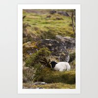 lamb Art Prints featuring Lamb by Aaron MacDougall