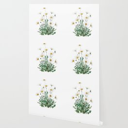 white Margaret daisy watercolor Wallpaper