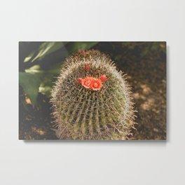 Cactus Blossom Metal Print