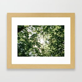 Detail of tree leaves Framed Art Print