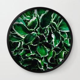 Hosta undulata albomarginata vibrant green plant leaves Wall Clock