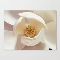 magnolia Canvas Prints featuring Magnolia by Esther Ní Dhonnacha