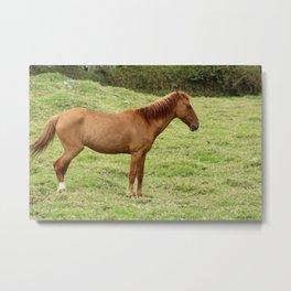 Brown Horse in a Grass Field Metal Print