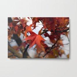 Fall Leaves Zoom Metal Print