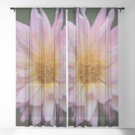 Pink Starburst Sheer Curtain