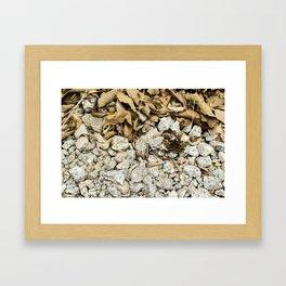 Korean Moth Framed Art Print