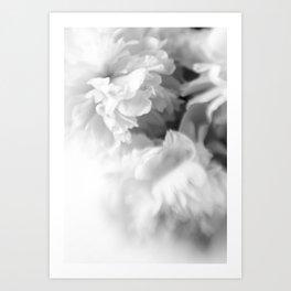 Blured white peonies Art Print
