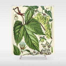 Humulus lupulus (common hop or hops) - Vintage botanical illustration Shower Curtain