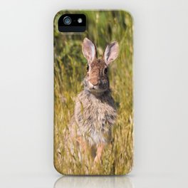 Cute and Curious Eastern Cottontail Rabbit in the Long Grass iPhone Case