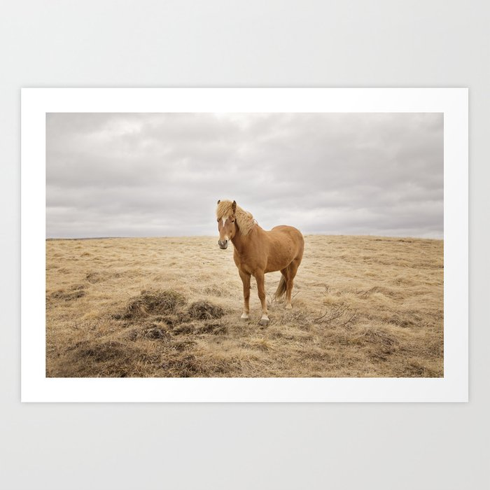 Solitary Horse in Color Art Print by applesandoatsphotography | Society6