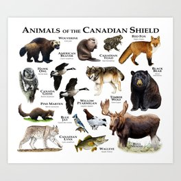 Animals of the Canadian Shield Art Print