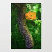 poppies Canvas Prints featuring Poppies by Falko Follert Art-FF77