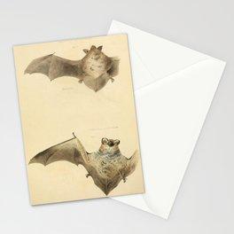 Vintage Print - The Zoology of New York (1842) - Carolina Bat / Hoary Bat Stationery Cards