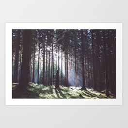 Magic forest - Landscape and Nature Photography Art Print