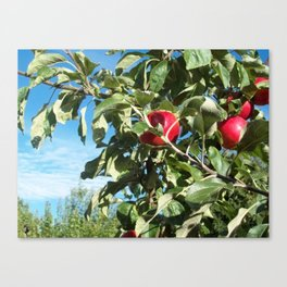 Apples to Apples Canvas Print